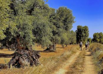 Das Wandern in Apuliens Landschaft wird Sie begeistern!