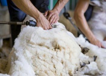Die Wollindustrie ist ein nationales Kulturgut von Wales