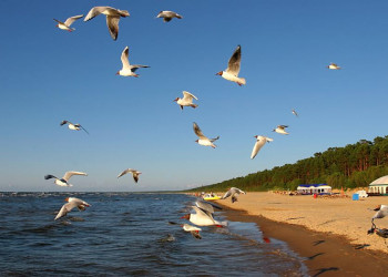 Meer, Strand mit Wald und Möwen