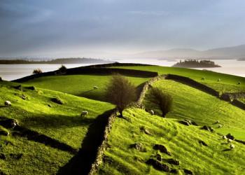 Typische Schafweide an der Atlantikküste in Irland